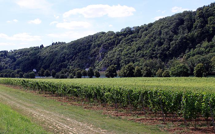 Le grand vignoble du Château Bon Baron à Houx (Yvoir)