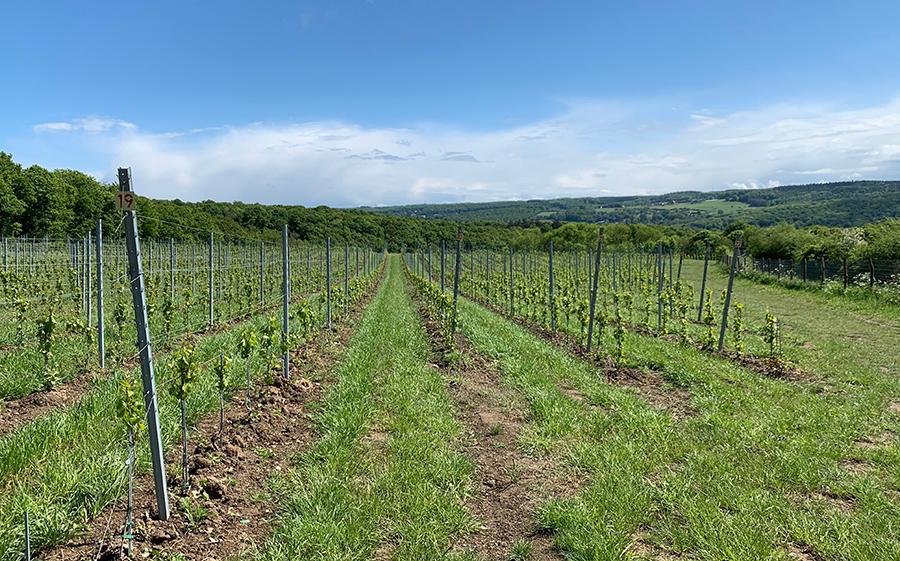 Photo des vignes